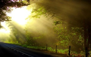 Sun Rays on Road-green