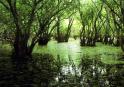 3-Swamp